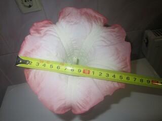 бругмансия розовая